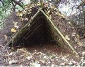 survival shelter using brancjes