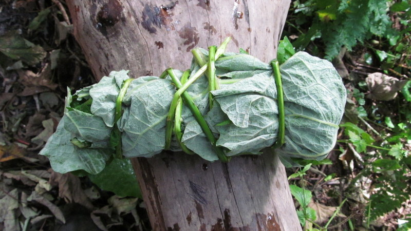 burdock leaf wrap