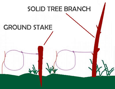 Bushcraft Skills How To Make A Simple Survival Snare Trap