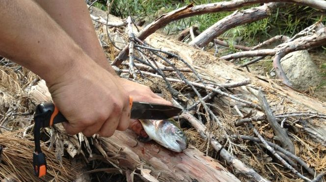 bear grylls knife gutting fish