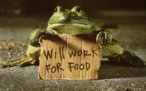 funny frog work for food