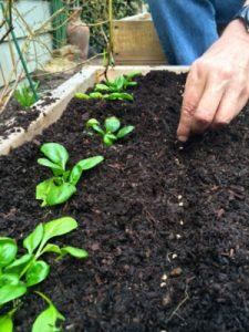 preppers seed planting